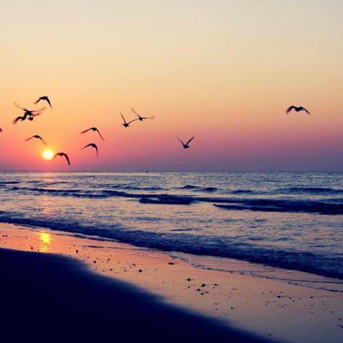 birds_flying_at_sunset